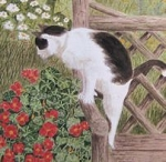 Gift Enclosure Card, Cat And Geraniums (Pkg of 6)