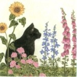 Gift Enclosure Card, Black Cat Watching (Pkg of 6)