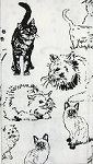 Kitchen Towel With Cats, Krazy Cats