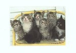 Kitten Enclosure Card, Kittens In Chair