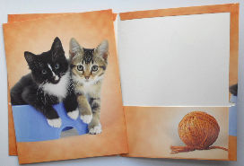 Kitten Portfolio & Folio, Two Kittens