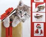 Christmas Cat Note Card Folio