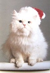 Cat Christmas Card, Bah Humbug!