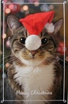 Cat Christmas Card, Meowy Christmas