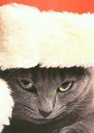 Cat Christmas Cards, Warm And Snugly Christmas Wishes