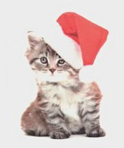 Cat Christmas Card, Warm And Fuzzy Wishes