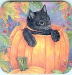 Cat Coaster, Black Kitten In Pumpkin