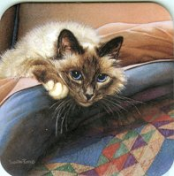 Cat Coaster, Cat On Bed, Blue Eyes