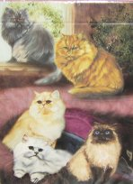Cat Playing Cards. Five Persian Cats