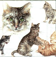 Cats And Kittens Paper Napkins