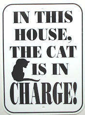 Cat Sign, In Charge