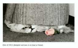 Cat Sympathy Card, Life's Deepest Sorrows