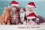 Collectible Cat Christmas Card, Jingle All The Way