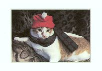 Gift Enclosure Card, Cat With Hat