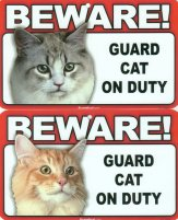 Guard Cat Sign, Beware, Maine Coon Or Orange Cat