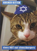 Hanukkah Cards, Kosher Kitten
