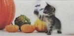 Kitten Ruler, Pumpkins And Butterflies