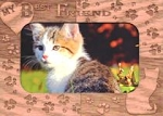 Magnetic Cat Picture Frame, My Best Friend