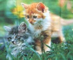 Microfiber Cleaning Cloth, Two Kittens