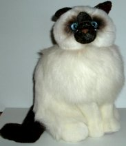 Plush Cat, Burmese