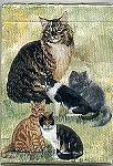 Cat Playing Cards, Five Cats, Best Friends
