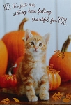 Cat Thanksgiving Card, Thankful For You