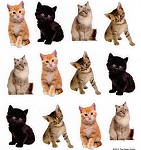 Cat Stickers, 24 Kittens