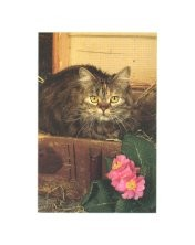 Cat Sympathy Card, Loss Of Your Pet