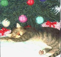 Christmas Gift Enclosure Cards, Cat Under The Tree