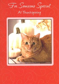 Cat Thanksgiving Card, For Someone Special